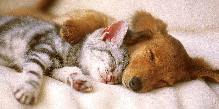 hund och katt försäkring
